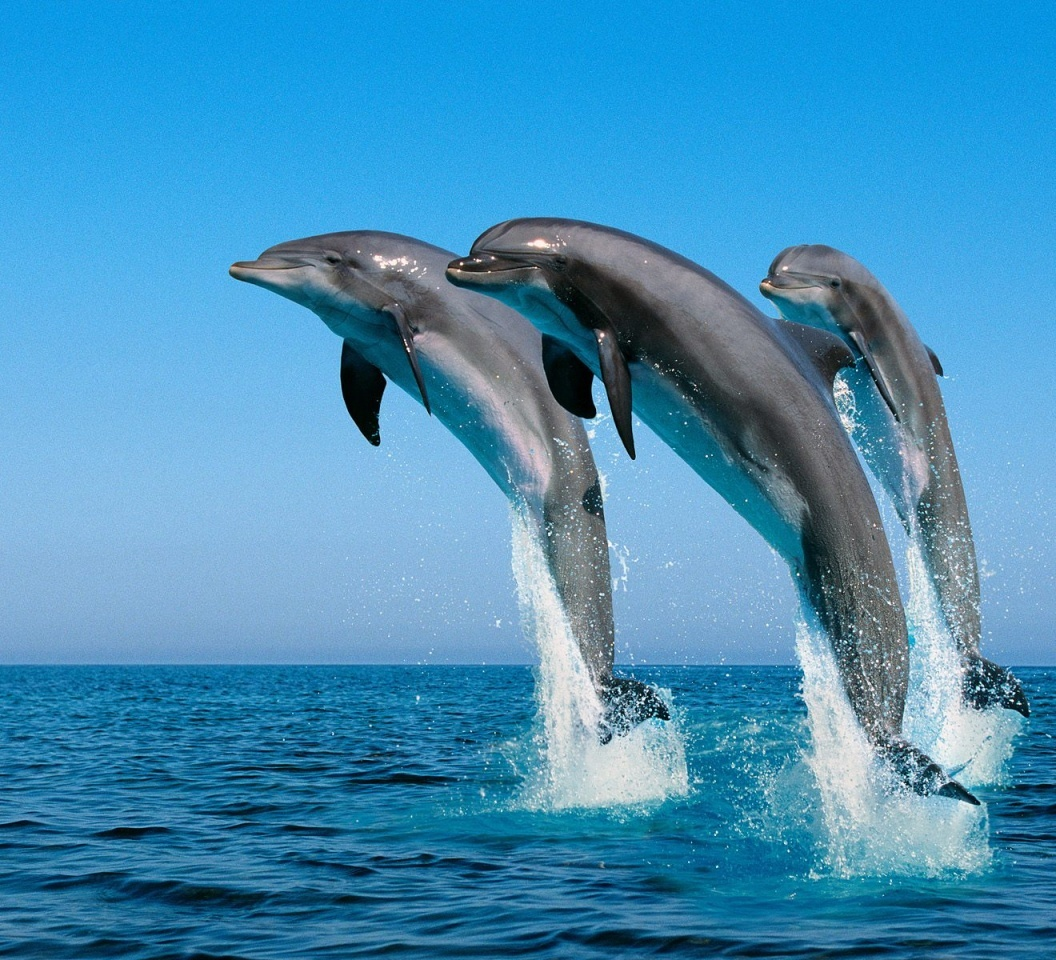 WHALES AND DOLPHINS IN MIRISSA AND KALPITIYA - SRI