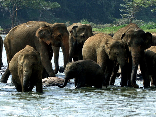 ELEPHANT ORPHANAGE - PINNAWALA - SRI LANKA