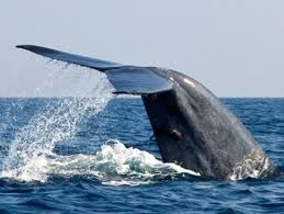 http://www.cyriltours.com/img/imageuploader/812630749Whales.jpg